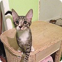 Adopt A Pet :: Gizmo - Harvey, LA