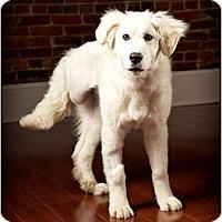 Adopt A Pet :: Emmie - Owensboro, KY