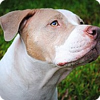 Adopt A Pet :: Freedom - Orlando, FL