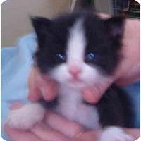Adopt A Pet :: Dobby - Keizer, OR