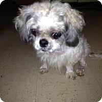 Adopt A Pet :: Lourdes - Mahopac, NY