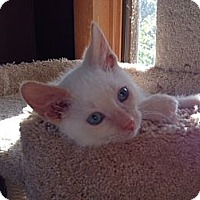 Adopt A Pet :: Benito - Byron Center, MI