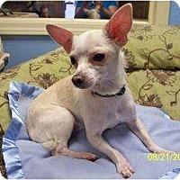Adopt A Pet :: Perkins - Mooy, AL