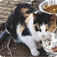 Adopt A Pet :: Star - Colmar, PA