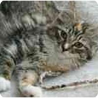 Adopt A Pet :: Rosalind - Arlington, VA