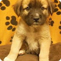 Adopt A Pet :: Zigfred - Gary, IN