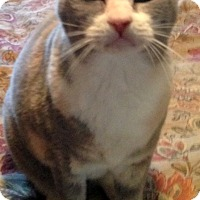 Adopt A Pet :: Chelsea (declaw) - Chattanooga, TN