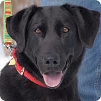 Adopt A Pet :: Posie - Cincinnati, OH