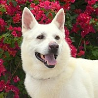 Adopt A Pet :: Malcolm - San Diego, CA