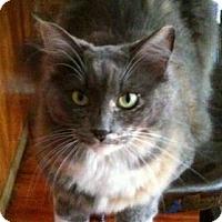 Adopt A Pet :: Gus - Brooklyn, NY