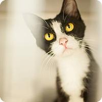 Adopt A Pet :: Rachel - Athens, GA