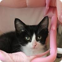 Adopt A Pet :: Bagley - New York, NY