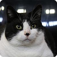 Adopt A Pet :: Tammi - Sarasota, FL