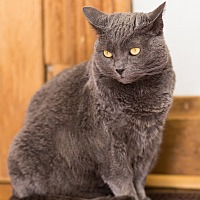Adopt A Pet :: Laurel - Greensburg, PA