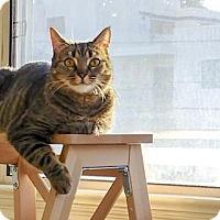 Adopt A Pet :: Sophia - Oakland, CA