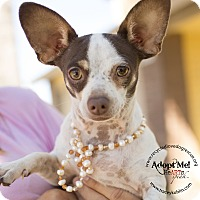 Chihuahua Dog for adoption in Inland Empire, California - NICHOLAS