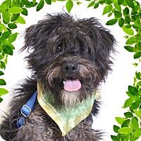 Adopt A Pet :: Garfunkel - Chico, CA