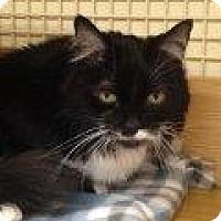 Adopt A Pet :: Watney - Tucson, AZ