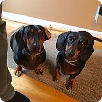 Adopt A Pet :: Raymond & Django (Bonded pair) - Washington, DC