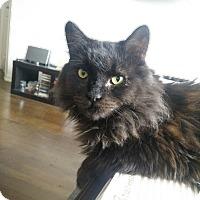 Adopt A Pet :: Leonardo - Toronto, ON