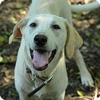 Adopt A Pet :: Moose - San Antonio, TX