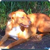 Adopt A Pet :: Pepper - Aurora, CO