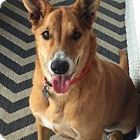 Adopt A Pet :: Wilma - Austin, TX
