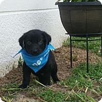 Adopt A Pet :: Tag - Weeki Wachee, FL