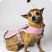 Adopt A Pet :: Leslie - Yelm, WA