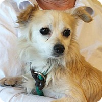 Adopt A Pet :: Princess - Rohnert Park, CA