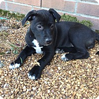 Adopt A Pet :: Tippy - Rochester, NH