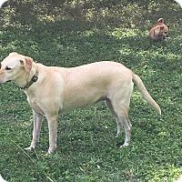 Adopt A Pet :: Callie - Boerne, TX