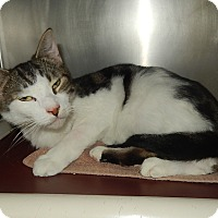 Adopt A Pet :: Bowser (New Bern Petsmart) - Newport, NC