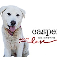 Labrador Retriever/Great Pyrenees Mix Dog for adoption in Sun valley, California - Casper