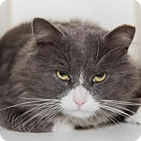 Adopt A Pet :: Gus - Lowell, MA