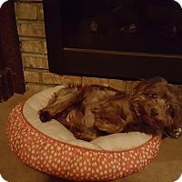 Adopt A Pet :: Izzie - Freeport, NY