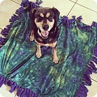 Adopt A Pet :: Eli - Lehigh Acres, FL