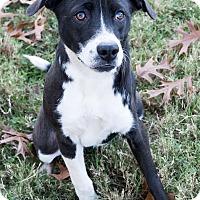Adopt A Pet :: Emilia Clarke - Jersey City, NJ