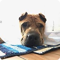 Adopt A Pet :: Maximilian Maxie-Boy - Orlando, FL