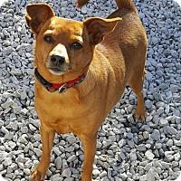 Adopt A Pet :: Herbie - Champaign, IL