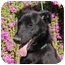 Photo 2 - Labrador Retriever Mix Dog for adoption in Chula Vista, California - Blackie