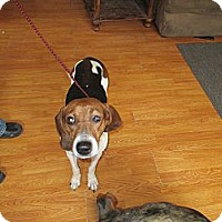 Adopt A Pet :: Miss Kay - Kendall, NY