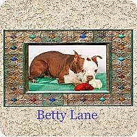 Adopt A Pet :: Betty Lane - Alabaster, AL
