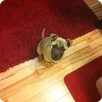 Adopt A Pet :: Keisha - Saskatoon, SK