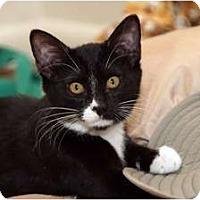 Adopt A Pet :: Kate - Scottsdale, AZ