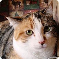 Adopt A Pet :: Cindy - Albany, NY