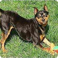 Adopt A Pet :: Jimmie - Florissant, MO