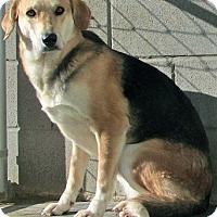Adopt A Pet :: Lindsey - Tahlequah, OK