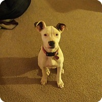 Adopt A Pet :: Avery, great pup! - Sacramento, CA