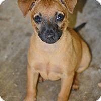 Adopt A Pet :: Ariel - Wimberley, TX